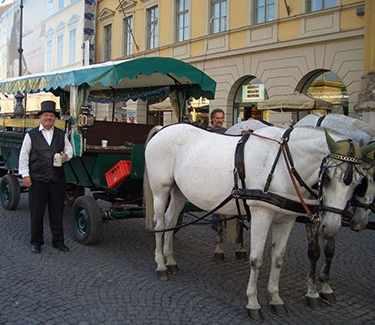 Horse Carriage Munich